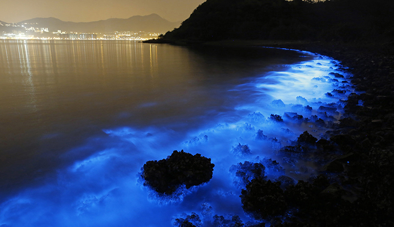 bioluminescenza